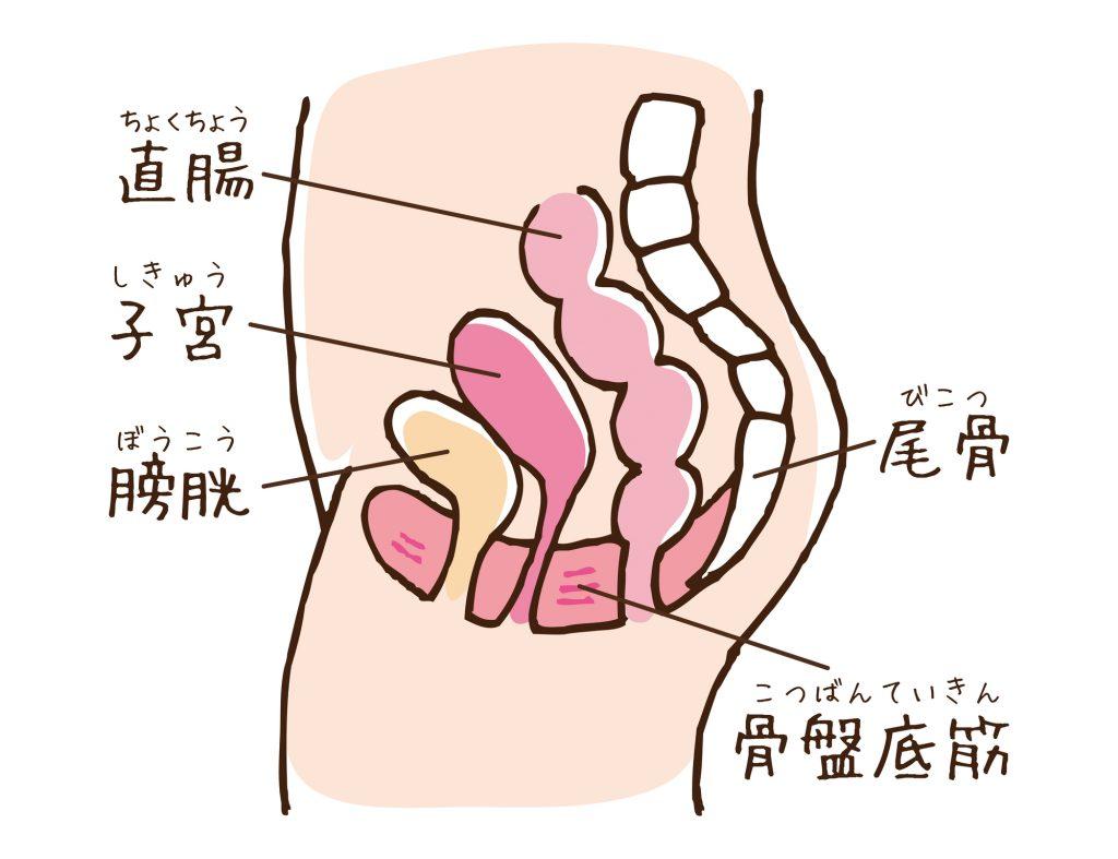 揺らす 子宮
