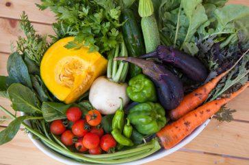 胆石は食事で予防できる?治療中に食べていいものや悪いものはある?