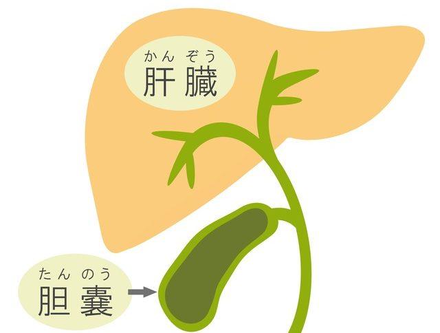 原発 性 胆汁 性 胆管 炎