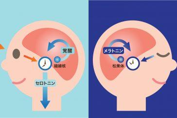 睡眠障害にメラトニンが関係してる?改善できるの?
