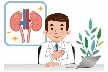 体の老廃物を出すために、腎臓はどんな構造になっているの?