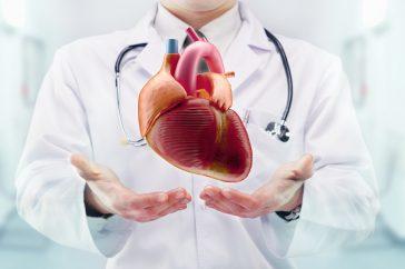 心臓の刺激伝導系とは?どんなふうに動いているの?